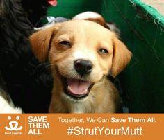 """Saving one dog won't change the world, but it will surely change the world for that one dog.""   #SaveThemAll #StrutYourMutt http://www.strutyourmutt.org/participant/Zpups"
