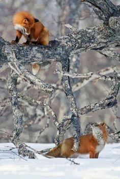 Fox Style. http://beautyharmonylife.com/32-beautiful-photos-of-animal-kingdom/