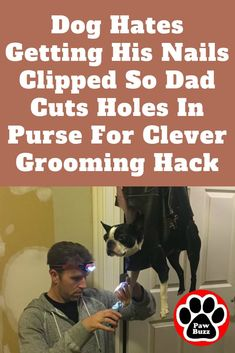 People were amazed b People were amazed by the dads brilliant idea. Who would have thought to buy a purse cut holes in it and make a comfy harness for a dog? Dog Care Tips, Pet Care, Dog Shedding Remedies, Horse Dance, Dog Grooming Tips, Puppies Tips, Dog Nails, Touching Stories, Got Him