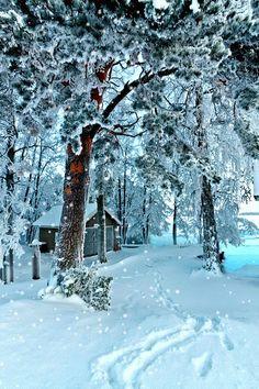 ❄️ WINTER SNOW GIF ❄️
