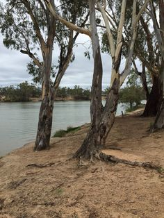 View of the Murray River, from Mildura, Victoria