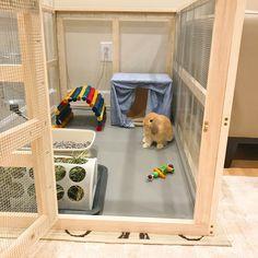 indoor rabbit cage My boyfriends dad built this for my Holland lop! Diy Bunny Cage, Bunny Cages, Rabbit Cages, Rabbit Cage Diy, Diy Bunny Hutch, Indoor Rabbit House, Indoor Rabbit Cage, House Rabbit, Pet Bunny Rabbits