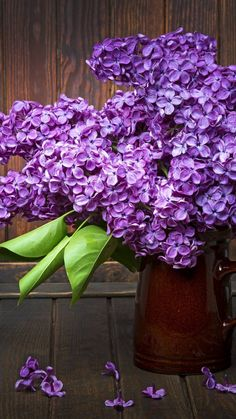 All Things Shabby and Beautiful: Photo Backyard Flowers, Beautiful Flowers, Flower Pots, Flowers And Leaves, Purple, Lilac Flowers, Flowers, Trendy Flowers, Lilac
