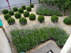 Fresh Garden Design Ideas for Small Spaces Lavender and box balls in a gravel bed