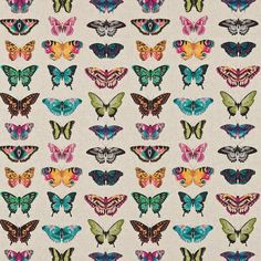 Amazilia Fabric Collection by Harlequin is a striking range of tropical fabrics bursting with character and flavour. As part of the latest Harlequin range, the Harlequin Fabrics, Harlequin Wallpaper, Wall Wallpaper, Pattern Texture, Tropical Fabric, Dynamic Design, Butterfly Wallpaper, Butterfly Print, Butterfly Images