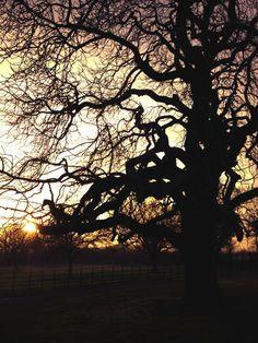 horse chestnut tree | via James Mason Horse Chestnut, Specimen Trees, Tree Branches, Horses, God, Dios, Allah, Horse, The Lord