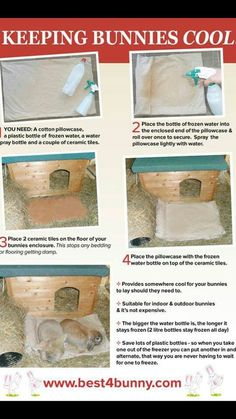 How to keep rabbits cool in the heat. we have used frozen cooler packs, but this sounds even better.***Summer tips, our Bunny House is in the shade too which helps*** Meat Rabbits, Raising Rabbits, Rabbit Facts, Bunny Hutch, Bunny Cages, Packing A Cooler, House Rabbit, Rabbit Life, Angora Rabbit