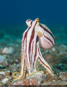 sea life - sea life photography - sea life underwater - sea life artwork - sea life watercolor sea l Beautiful Sea Creatures, Deep Sea Creatures, Animals Beautiful, Underwater Sea, Underwater Creatures, Fauna Marina, Kraken, Wale, Sea And Ocean