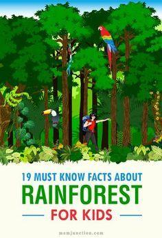 Rainforest Facts For Kids, Rainforest Preschool, Rainforest Classroom, Rainforest Crafts, Rainforest Project, Preschool Jungle, Rainforest Habitat, Rainforest Theme, Rainforest Animals