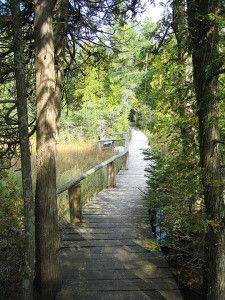 The Ridges Sanctuary, an Audubon Important Bird Area as well as a National Natural Landmark, featuring native wildflowers along its five miles of rustic trails and bridges.