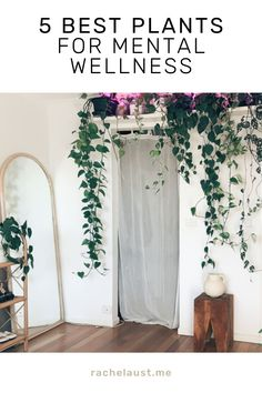 Sleep, rest, and recovery are essential for not only our physical health, but also our mental wellbeing. Many plants also have specialised features that either directly or indirectly improve your sleep quality. Some of mine are all around the house but these ones will work well in your room! Best Plants For Bedroom, Bedroom Plants, Peace Lily Plant, Lower Lights, Water Patterns, Health Heal, Physically And Mentally, Sleep Quality, Cool Plants