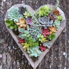 Succulent Heart Living Vertical Planter