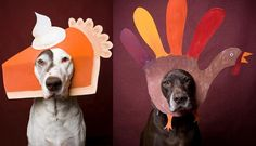 Are Your Pets and Home Ready For the Holidays? | Dog Lovers Today