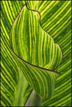 Natural Patterns by FloydSlip, via Flickr