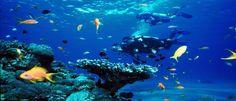 Os melhores locais do Mundo para mergulho - Bilhete de Viagem