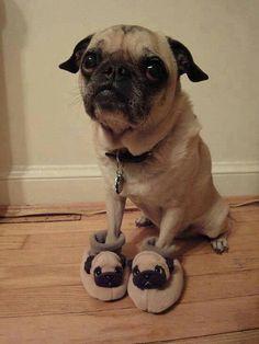 Oh my word so cute!! Pug slippers!