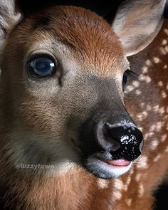 Baby Mocha, one day old❤️ Whitetail Deer Pictures, Deer Photos, Forest Animals, Nature Animals, Animals And Pets, Beautiful Creatures, Animals Beautiful, Cute Baby Animals, Funny Animals