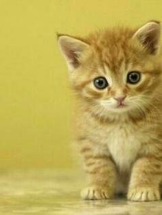 kitten kitten :D