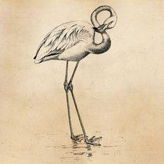 Vintage Flamingo Bird Illustration Printable by SilverSpiralStudio | Vintage Flamingo Bird Illustration Printable 1800 Antique Birds Print Instant Download Digital Image Clip Art Retro Black & White Drawing