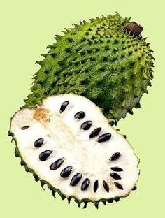 Soursop/Guanabana/Graviola (Annona muricata). Soursop has a sweet and tart custard-like pulp. The fruit are typically heart shaped, and weigh up to ten pounds. They make superb milkshakes, but can be eaten fresh as well.  Tropical Fruit, Benefits Of, Nature Remedies, Health Benefits, Philippines Fruit, Healthy Food, Soursop Fruit, Cancer, Natural Remedies