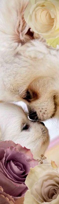 Love You Forever, Friends Forever, Mans Best Friend, Best Friends, Puppy Pictures, Puppy Pics, Art Of Love, Good Listener, Dog Life