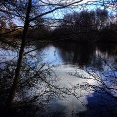 #naturephotography #reflections