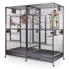 Cockatiel, Budgies, Bird Cage Design, Online Pet Store, Candy Art, Pet Supply Stores, Cool Store, Pet Shop, Arkansas