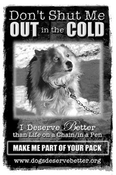 Dogs Deserve Better Don't shut them out. Chained to a dog house in all kinds of weather with no love or compassion is cruel, chained dogs should be reported. I Love Dogs, Puppy Love, Animals And Pets, Cute Animals, Strange Animals, Stop Animal Cruelty, Deserve Better, Dog Quotes, Voice Quotes