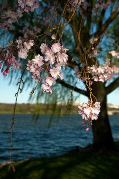 Potomac Spring, Maryland