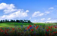 цветы, холмы, облака