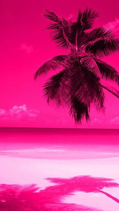 Trendy Ideas For Palm Tree Wallpaper Iphone Neon Tree Wallpaper Iphone, Summer Wallpaper, Beach Wallpaper, Cool Wallpaper, Scenic Wallpaper, Pink Beach, Pink Sunset, Photo Wall Collage, Picture Wall