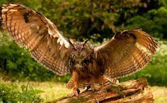 Owl c260515
