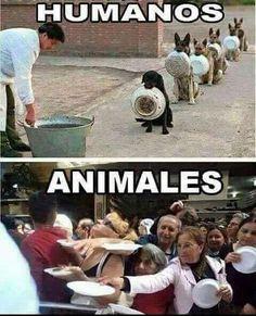 La realidad es que nosotros somos los verdaderos animales