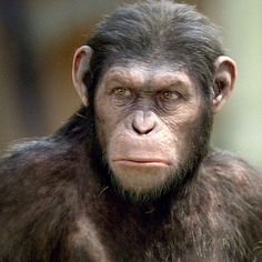 "Andy Serkis en ""El Origen del Planeta de los Simios"" (Rise of the Planet of the Apes), 2011"