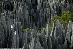 """Lemurs in Madagascar Reserve Tsingy de Bemaraha is a natural wonder of the world. On its territory, """"Stone Forest"""", which began to form even million years ago. (Photo by Stephen Alvarez): National Geographic – Best Photos of 2011 Parc National, National Parks, Beautiful World, Beautiful Places, Beautiful Beautiful, Monte Roraima, Lago Baikal, Reserva Natural, Natural Phenomena"""