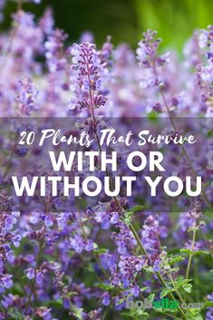 Plants That Survive With or Without You These are the easy-to-care for plants to try if you don't have a green thumb.These are the easy-to-care for plants to try if you don't have a green thumb. Garden Yard Ideas, Lawn And Garden, Garden Bed, Gardening For Beginners, Gardening Tips, Gardening Websites, Texas Gardening, Gardening Gloves, Hydroponic Gardening