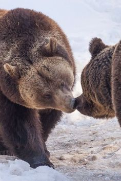 Beary cute touch of affection.