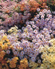 Flowers  -Martha Stewart Living