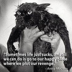 wet kitty plotting revenge
