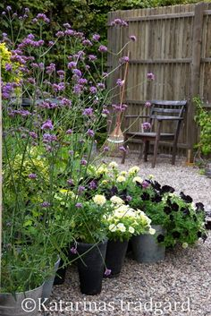 Eco Garden, Garden Cottage, Garden Plants, Back Gardens, Outdoor Gardens, The Secret Garden, Summer Plants, Interior Garden, Garden Pictures