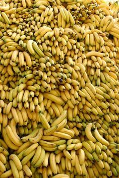 banana fruits,complete details about banana fruits provided by banana fruits in Cameroon. You may also find other banana fruits related selling and buying leads on Fruit And Veg, Fruits And Vegetables, Fresh Fruit, Bananas, Fruitarian Diet, Banana Fruit, Banana Party, In Natura, Mellow Yellow