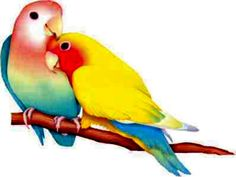 Download Free Wallpaper - Wallpapers Cute Love Box Birds Loving Colorful Kissing 1024x768