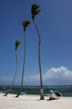 The Palm Trees of Punta Cana, Dominican Republic. Transformers, Places Around The World, Around The Worlds, Greater Antilles, Water Surfing, Another Day In Paradise, Sunny Beach, Caribbean Sea, All Inclusive Resorts