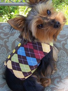 Dog Harness Vest Preppy Argyle with bow tie Size Small for toy dogs, $35.00