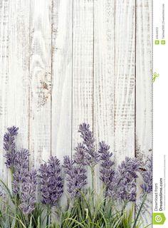 Bouquet Lavender Stock Photo - Image: 44544312