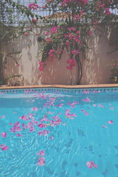 Bougainvillea is not the best pool-side plant but its leaves look pretty if you don't mind cleaning them up! Bougainvillea, Summer Of Love, Summer Fun, Summer Time, Summer Pool, Cecile, Pool Houses, Beautiful Places, Beautiful Mess
