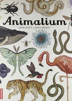animalium : très belles illustrations. Classement et textes un peu moins convaincants.
