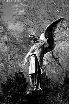 #Graveyard #Friedhof #Düsseldorf