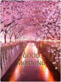 Good Morning Beautiful Pictures, Good Morning Nature, Cute Good Morning Quotes, Good Morning World, Good Morning Photos, Good Morning Flowers, Good Morning Messages, Good Morning Good Night, Morning Pictures