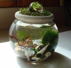 Zen. Garden. Crystal Ball Sphere. Stone Top. Marimo Ball. by MyZen